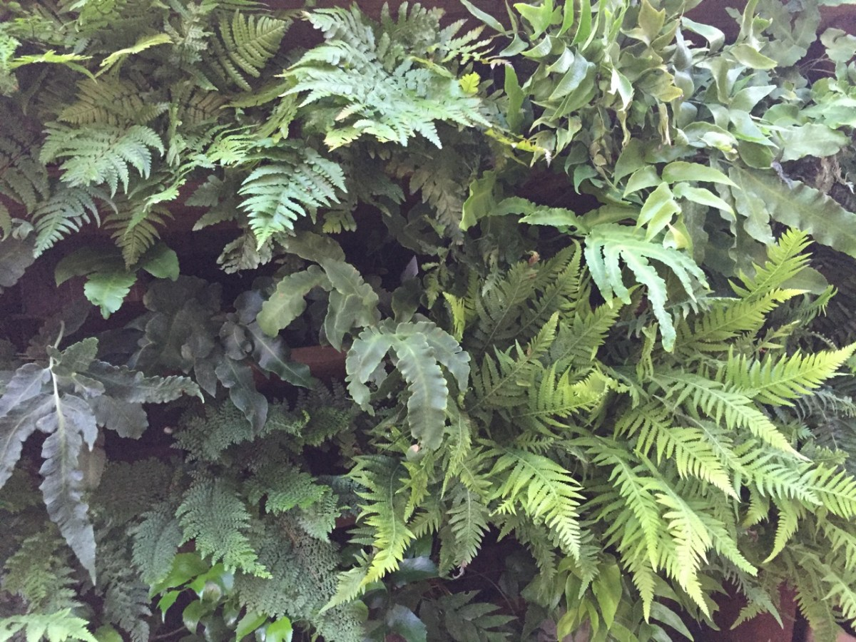 Fernatic: 50 fern species, 1 living wall!